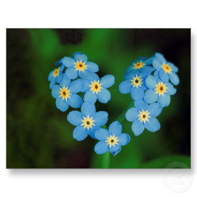 Heart_shaped_forget_me_not_flowers_postcard-p239706806051717736envli_400